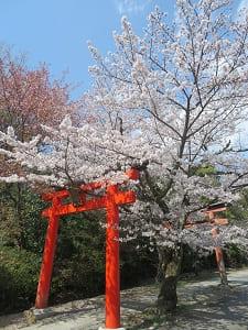 竹中稲荷神社の参道