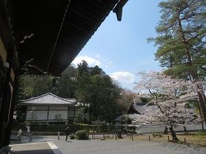 法堂から見る桜