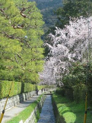 小川と枝垂れ桜