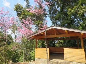 東屋と陽光桜