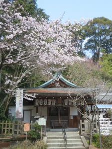 恵比須殿と桜
