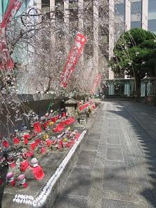 地蔵と御幸桜