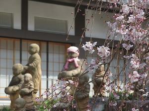 枝垂れ桜と十六羅漢