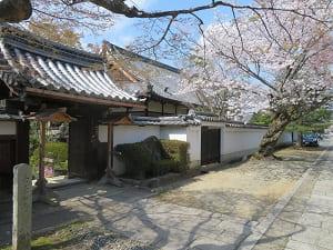 去来の寺と桜