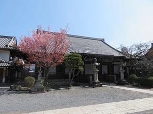 大方丈と蜂須賀桜