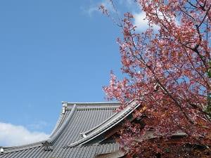 空と蜂須賀桜