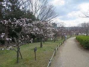 梅小路公園