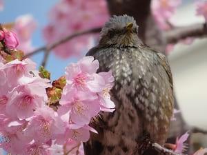 居眠りする鳥