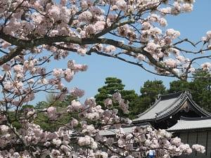 車返桜と清所門