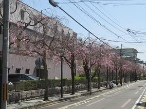 京都地方裁判所