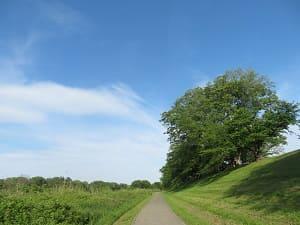 空と桜並木