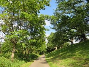 新緑の中を歩く