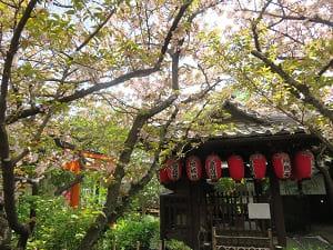 手水屋と観音桜