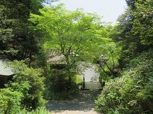 内宮から見る新緑