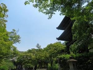 新緑と三重塔