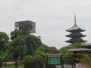 不二桜と五重塔