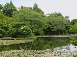 弁天島から見る鏡湖池