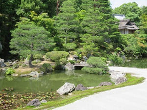 池の奥に見える飛濤亭