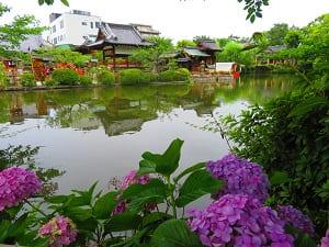 梅雨の神泉苑