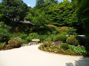 初夏の下段の庭