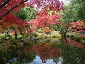 秋の心字池
