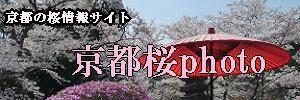 京都桜photo
